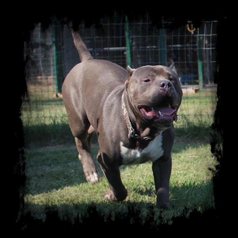 Outlaw Bullies Billy the Kid